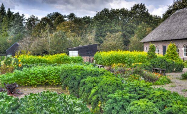 garden-kitchen